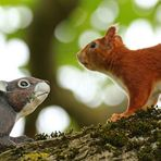 Begegnung im Nussbaum