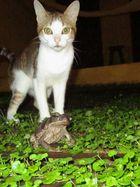 Begegnung in Brasilien - Katze und Frosch