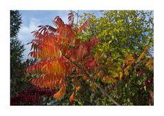 Begegnung mit dem Herbst