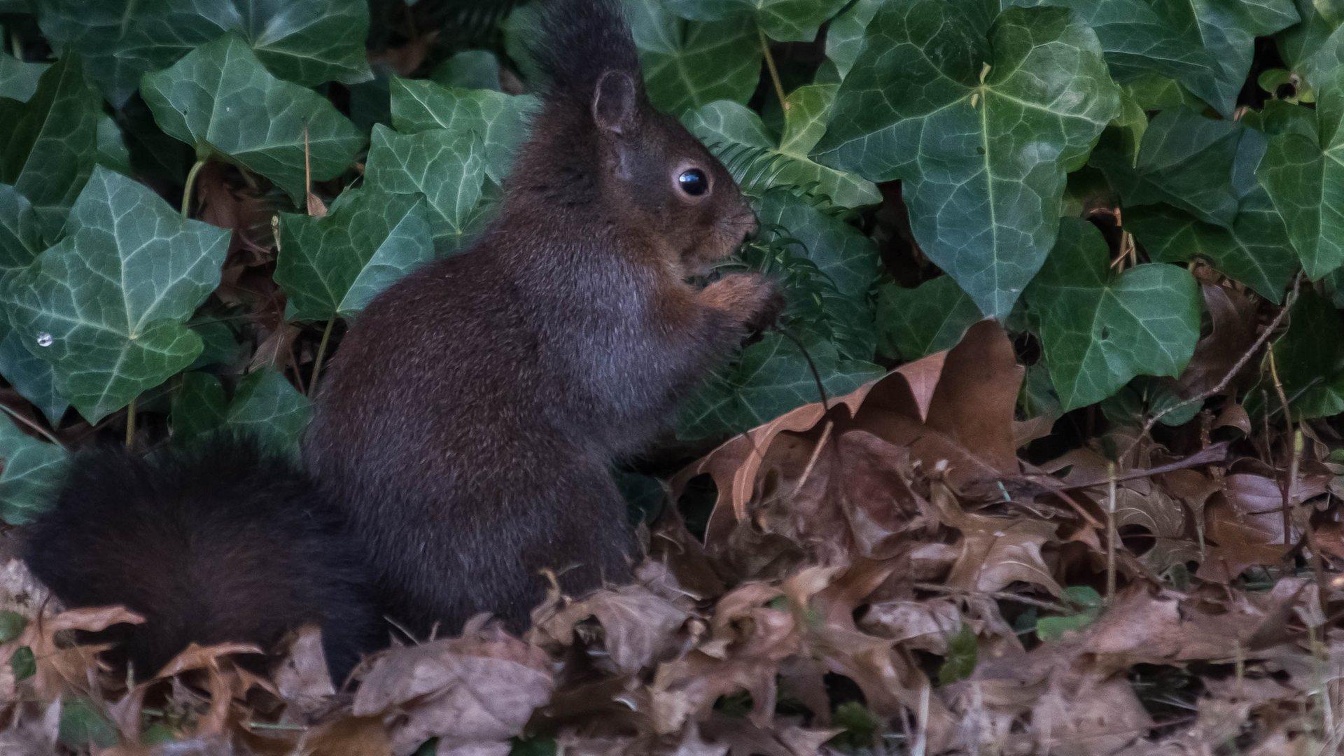 Begegnung mit einem Eichhörnchen
