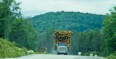 Begegnung mit Holztransportern