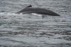 Begegnungen auf See                         DSC_2911