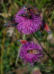 Begehrte Blume