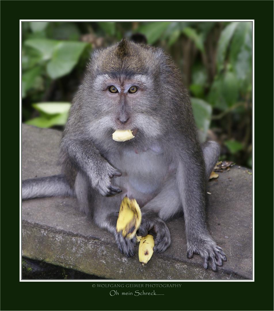 Begenungen im Affenwald von Ubud - Bali 2