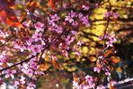 Beginnender Frühling 10