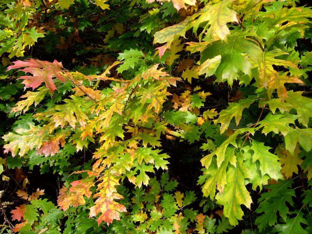 Beginnender Herbst