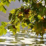 ...beginnender Herbst.....