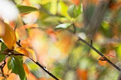 Beginnender Herbst in der Aronia