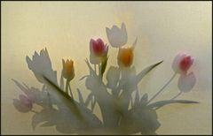 * Beginning of spring! *