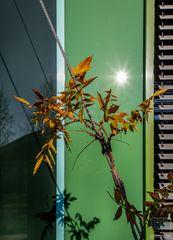Begrünung vor grüner Fassade