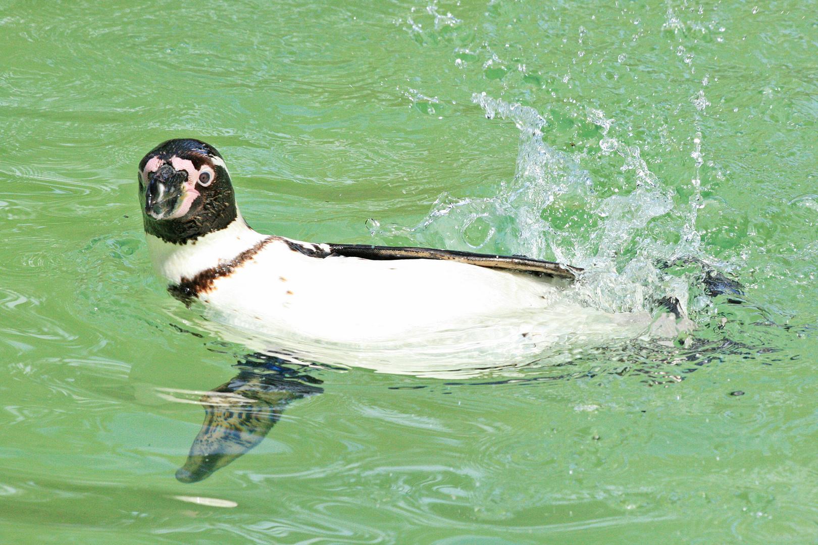 Begrüßung auf Pinguin.