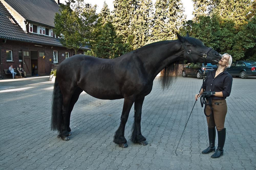 begrüßungskuß zwischen pferd und reiterin foto  bild