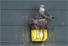 Beheiztes Nest...