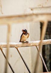 behind bars,,,