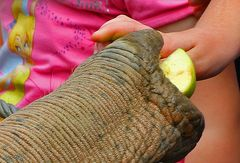 behutsam, zart und vorsichtig     (Elefantenrüssel)