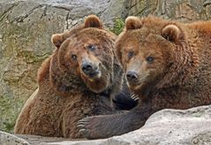 Bei den Bären