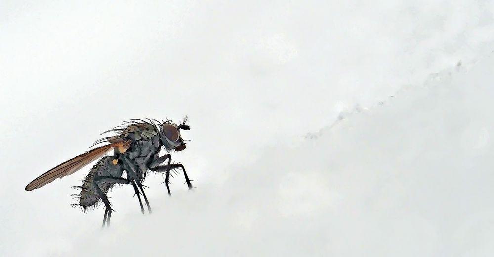 Bei den Fliegen hat der Wintertourismus schon begonnen! - Elle a l'air d'aimer la neige!
