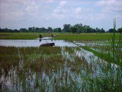 Bei den Reisbauern