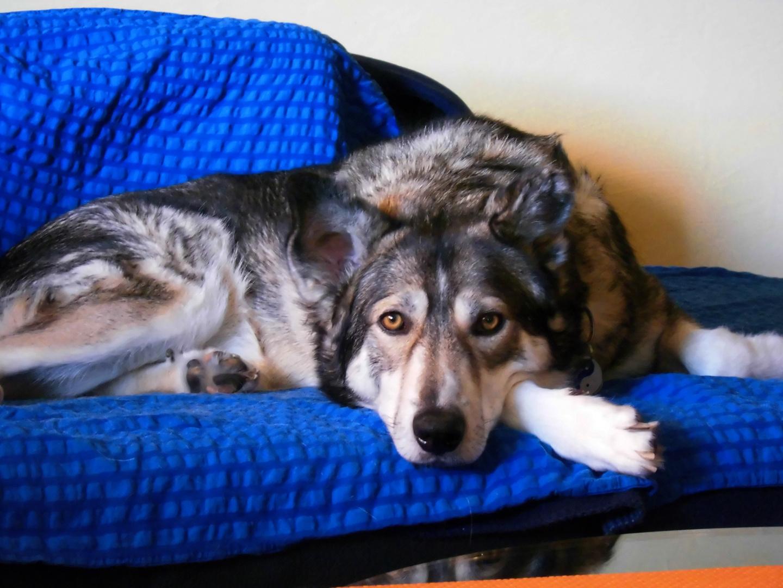 bei der Hitze heute kann man/hund ja nur chillen ...