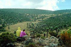 Bei der Horombo-Hütte