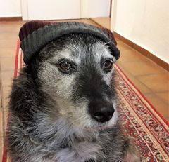 Bei der Kälte geht Hund mit Mütze !