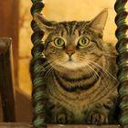 Bei diesem hypnotisierenden Blick...