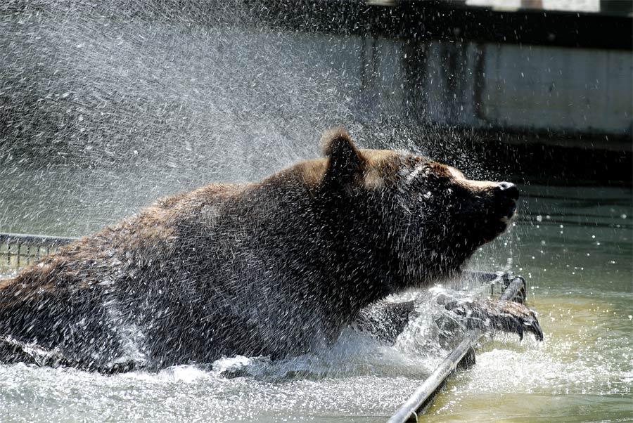 Bei diesem Wetter schüttelt es nicht nur den Bär!