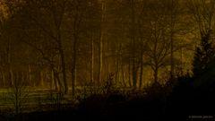 Bei Dunkelheit im Nebelwald