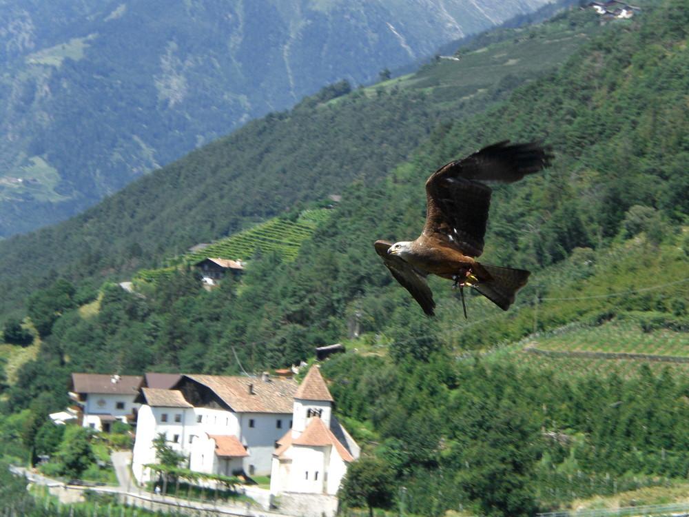 Bei einer Vogelschau in Südtirol ( Am Schloß in Dorf Tirol )