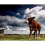 bei herrlichem Foto- Wetter war ich auf der Kuhweide...