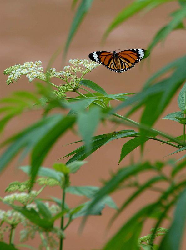 bei Luang Namtha: soviel schöne Schmetterlinge!
