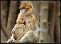 Bei Mama kuscheln