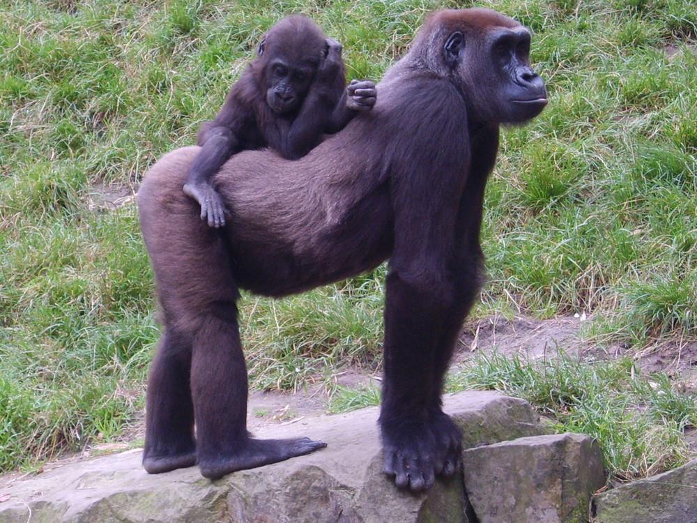 Bei meiner Gorillamama ist es doch am schönsten.