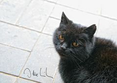 Bei schwarzen Katzen....