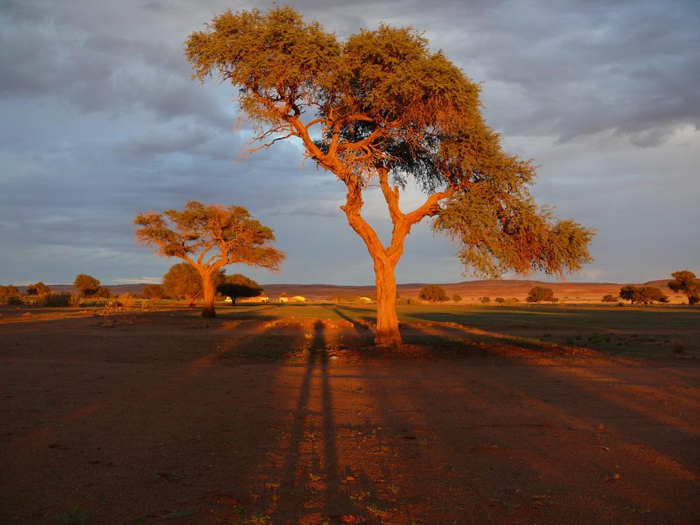bei Sesriem in der Namib