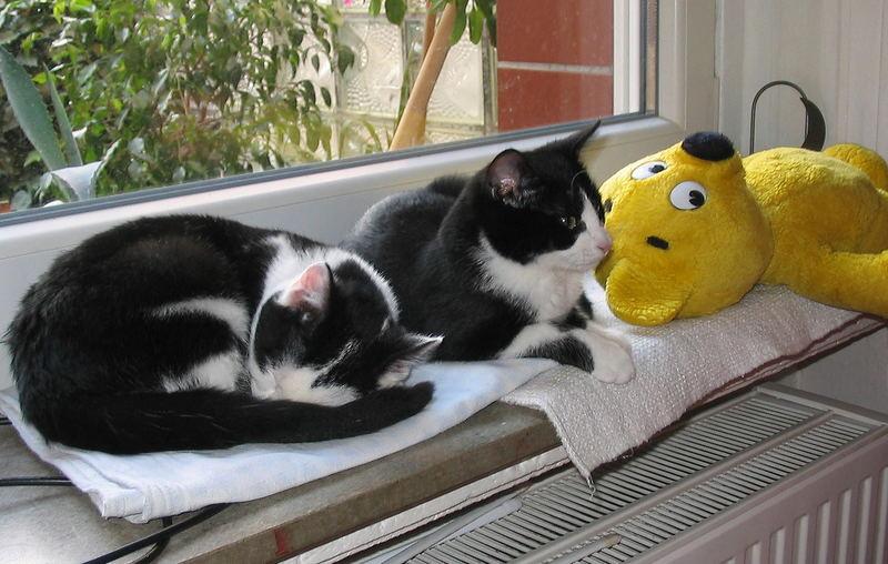 Bei so viel Katzen haut es den gelben Bären auch um....
