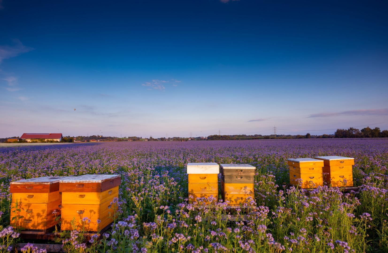 Bei uns daheim - gibt bestimmt einen guten Honig
