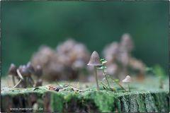 Bei uns im Wald ....