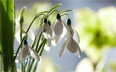 Bei uns ist Frühling....