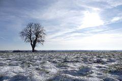 Bei uns ist in diesem Jahr der erste Schnee gefallen