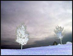 beide bäume