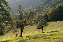 Beim alten Birnbaum