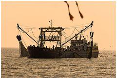 beim Krabbenfischen vor Texel