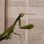 beim lesen erwischt
