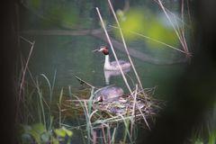 Beim Nestbau beobachtet