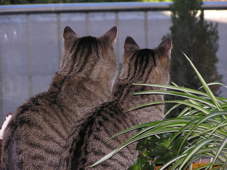 Beim Vogelbeobachten...2