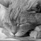 Beim Zeitunglesen eingeschlafen