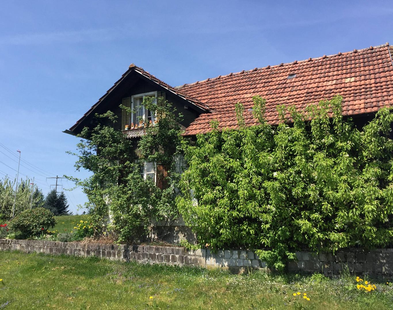 Beim Zwergenhaus ...