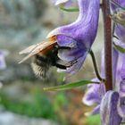 Being bumblebee