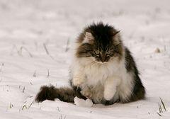 Beinsalat...oder auch Ihh Schnee